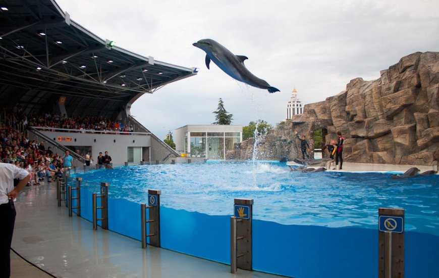 عرض الدلافين باتومي